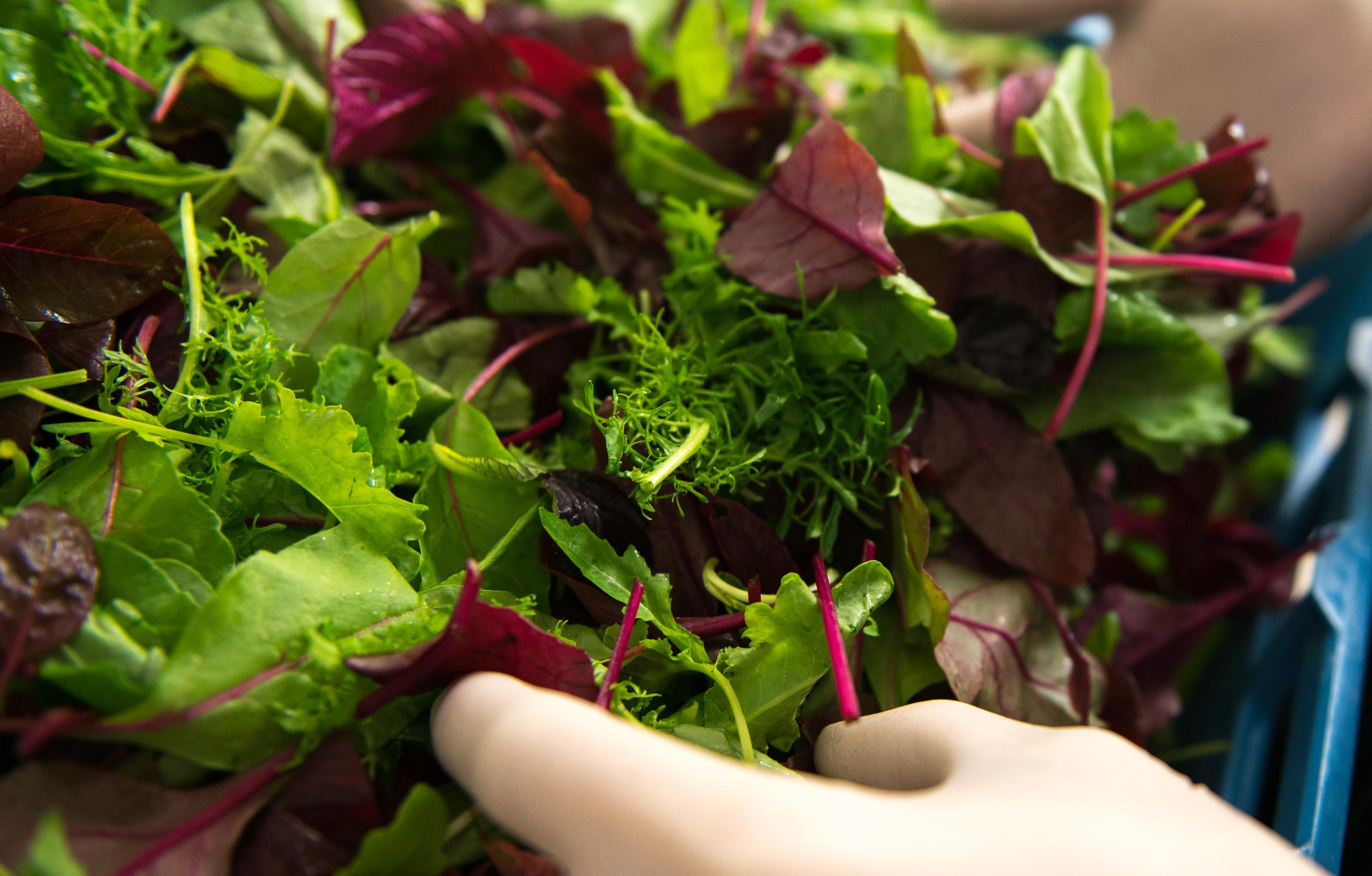Walter Klunker - Salat